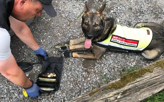 Zoll-Hund Lennox hat Geld gefunden!