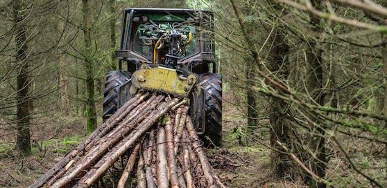 Ein Steirer starb bei Holzarbeiten. (Symbolfoto)