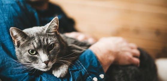 Vor allem Katzen werden in den Sommermonaten vermehrt abgegeben.