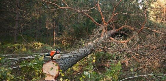 (Symbolfoto): Ein Pensionist (76) aus dem Bezirk Villach-Land wird bei einem Forstunfall schwer verletzt.