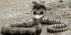Kobra tötet Schwangere, Baby überlebt wie durch Wunder