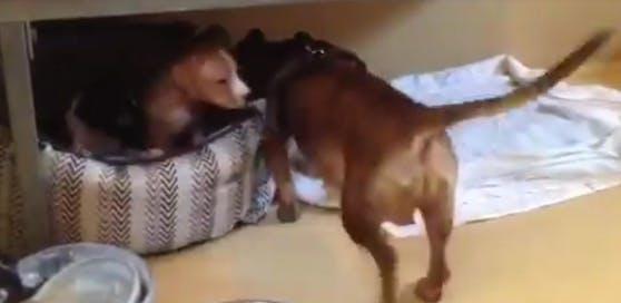 Große Freude bei Hunde-Mama und Welpen beim Wiedersehen!