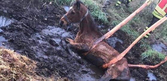 Die Feuerwehr hob das Pferd aus dem Dreck.