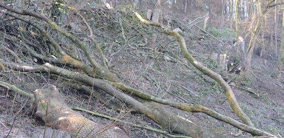 Die Baumrodung sorgt bei vielen Anwohnern für Ärger.