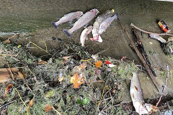 Einige der toten Fische.