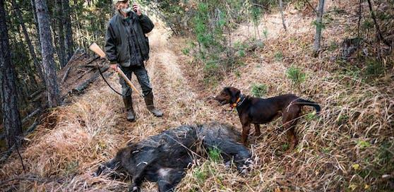 In Tschechien wurden 80 km von der österreichischen Grenze entfernt 191 verseuchte Wildschweine erlegt.