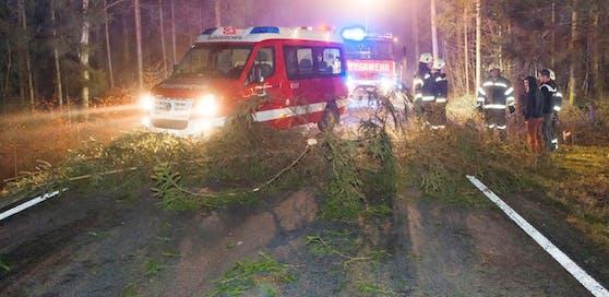 Der mutwillige umgeschnittene Baum verursachte einen Unfall.