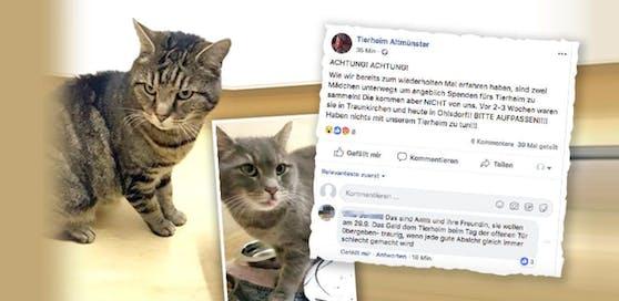 """""""Bärli"""" und """"Balu"""" wurden aus dem Tierheim geholt. Mit dem gesammelten Geld wollte sich eine junge Tierfreundin beim Tierheim bedanken. Eine Userin klärte auf Facebook das ganze Missverständnis auf."""
