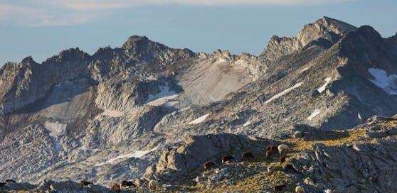 Der Bergsteiger stürzte vom Gipfel der Hochalmspitze ab.