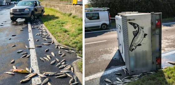 Bei einem Unfall im Innviertel in Oberösterreich starben 600 Fische. (Fotos: Autobahnpolizeiinspektion Ried im Innkreis)