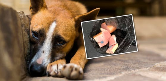 Der echte Köder; Symbolbild eines Hundes.