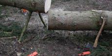Forstarbeiter (37) von Baumstamm überrollt – tot