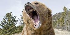 Touristin macht Foto von Grizzly - muss ins Gefängnis