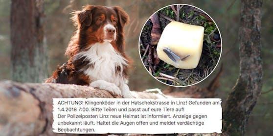 Schon im April legte ein Hundehasser einen Klingenköder in der Neuen Heimat aus.