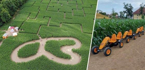 Das Mais-Labyrinth in Kronstorf lässt heuer mit einigen Neuerungen aufhorchen.