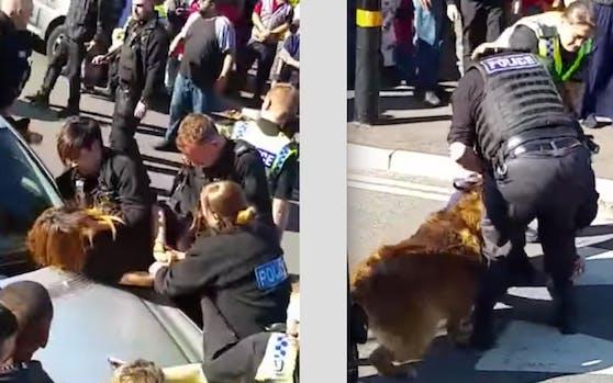 Hammer: Die Polizei aus Sheffield (GB) musste mit Gewalt und Hunden gegen die Brutalo-Schüler vorgehen.