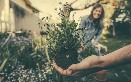 Am 5.und 6. April gibts am Schwendermarkt alles, was das Gärtnerherz begehrt. (c) Pixabay