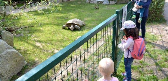 Ein Schnuppertag im Linzer Zoo kostet 70 Euro.