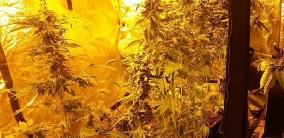 """Cannabis-Plantage in Wien-Liesing: """"Hobbybauer"""" flog auf."""