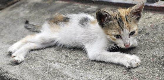 Eine magere junge Katze (Symbolbild).