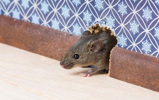 Flink und hungrig: Die Mäuse