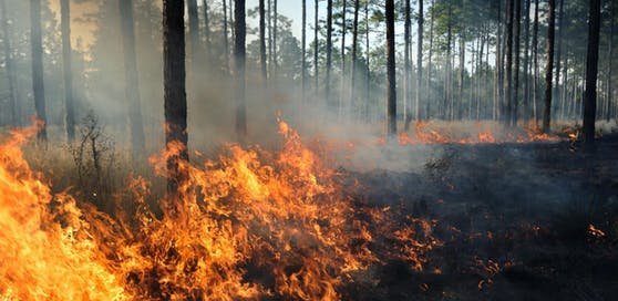 Ein Waldbrand wütet südwestlich von Berlin.