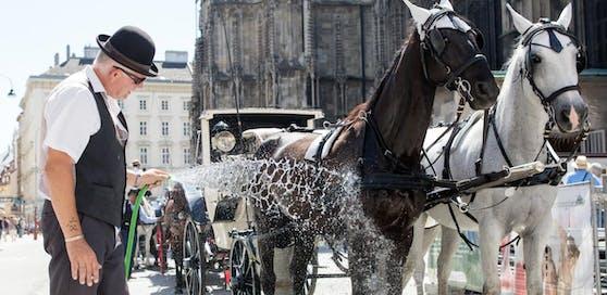 Die Fiaker mussten aufgrund der Hitze vom Stephansplatz abziehen.