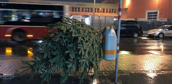 So sollte der Christbaum nicht entsorgt werden!