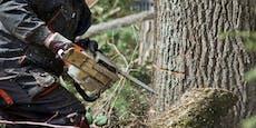 56-Jähriger von Baumstamm erdrückt – tot