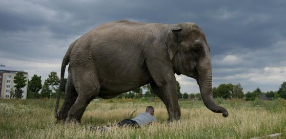 Ein Mann wurde von einem Elefanten im Schlaf getötet