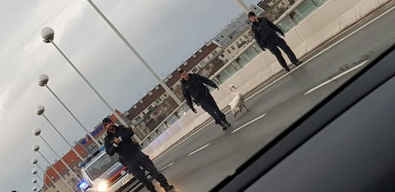 Nicht zum ersten Mal musste die Polizei am Donnerstag einen Schwan von der Reichsbrücke eskortieren.