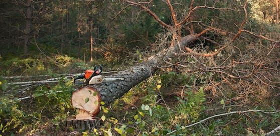 Der Mann wurde unter einem Baum eingeklemmt.