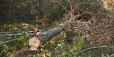 Mann unter Baum begraben, Jogger hörten seine Schreie