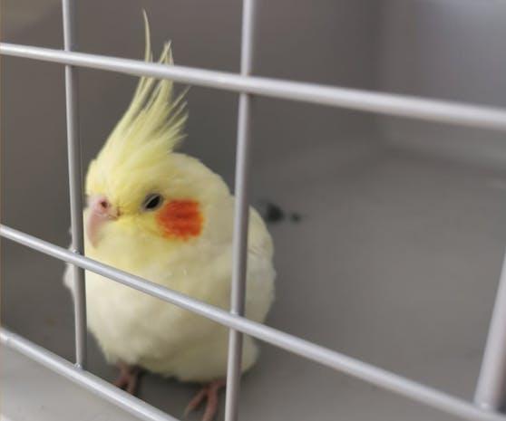 Nach seinem kurzen Aufenthalt auf dem Polizeirevier holte das TierQuartier den Vogel ab.