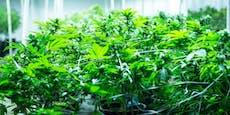 Warum Cannabis legalisiert werden sollte