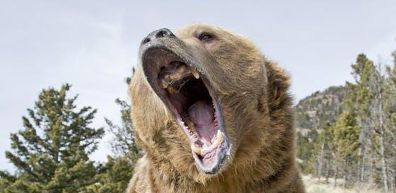 Ein entlaufener Zoobär tötete einen Pensionisten (84).
