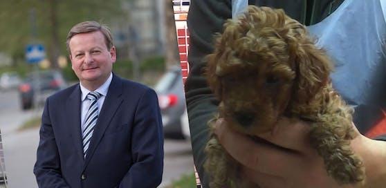 """29 Welpen (re.) wurden im Bezirk Bruck in einem illegalen Tiertransporter aufgegriffen; Waldhäusl (li.) nennt sie """"Hunde mit Migrationshintergrund"""""""