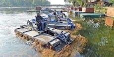 Sauber! Mähbote fischten 1.900 Tonnen Planzen aus Donau