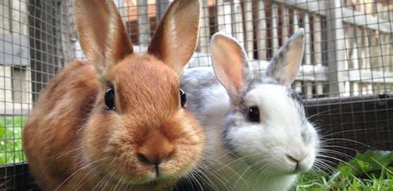 Ein Unbekannter hat in Steyr drei Kaninchen auf dem Gewissen.