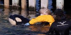 Gestrandetes Wal-Baby stirbt – Helfer am Boden zerstört
