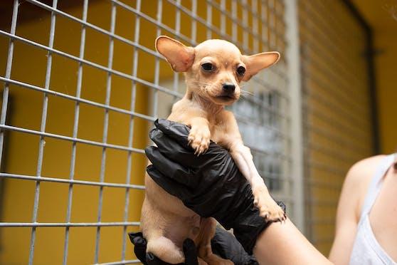 Der kleine Toni bereitet der Tierheim-Leiterin Sorgen.