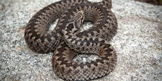 12-jähriges Mädchen von Schlange gebissen