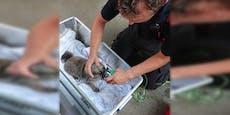 Feuerwehr rettet Frau und Hunderl aus Flammenwohnung
