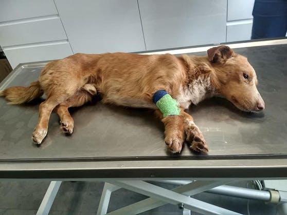 """Der kleine """"Krecik"""" wurde lebendig in einem Sack begraben. Ein zweiter Hund mit dem selben Schicksal war bereits tot."""