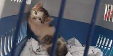 Gerettet! Kätzchen steckte in Wand fest