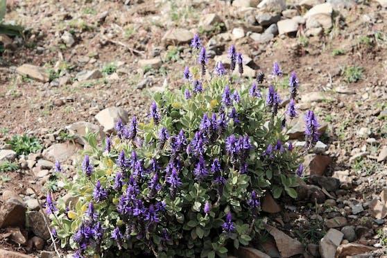 Verpiss-dich-Pflanzen mögen es eher trocken als feucht.