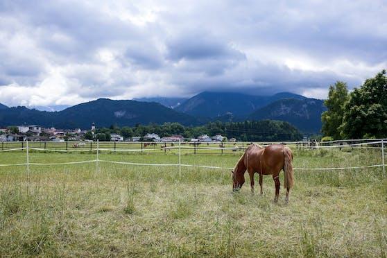 Die Weide der Pferdeklappe hat einen einmaligen Bergblick.