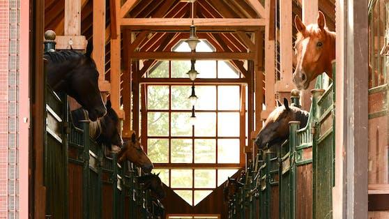 """In Tirol wurde nun die erste """"Pferdeklappe"""" des österreichischen Tierschutzvereins gegründet."""