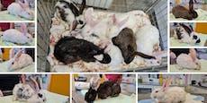 Herzlos! Neun Kaninchen eiskalt ausgesetzt