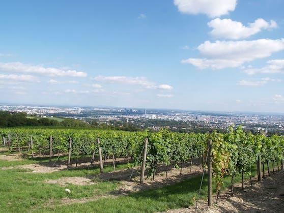 Das Weingut Cobenzl geht beim Wiener Weinpreis als Dreifach-Sieger hervor.